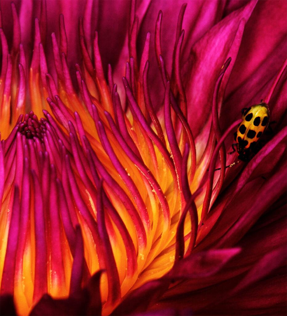 bugs in a flower